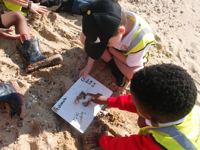 Working together to estimate & count at the beach
