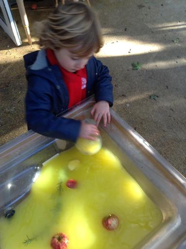 Exploring apples in the water tray