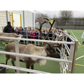 Children from Elm Class and the reindeer