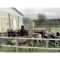 Children from Elm Class and the reindeer.r