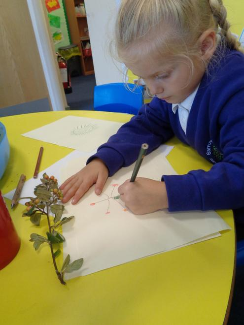 Observational drawing - signs of autumn
