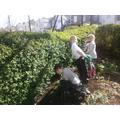 Year 3 - Secret Garden