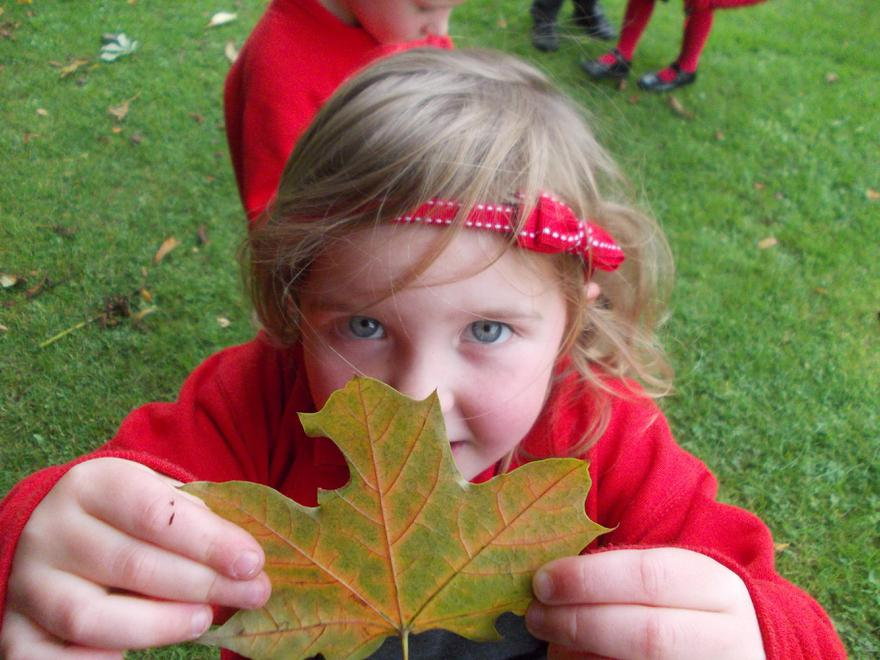 ... and a huge leaf!