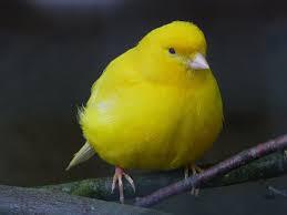 """A canary."""