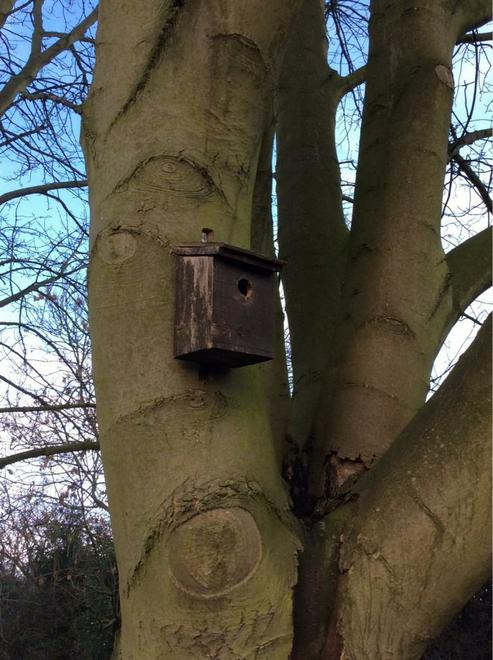 Bird boxes to help the birds make their homes