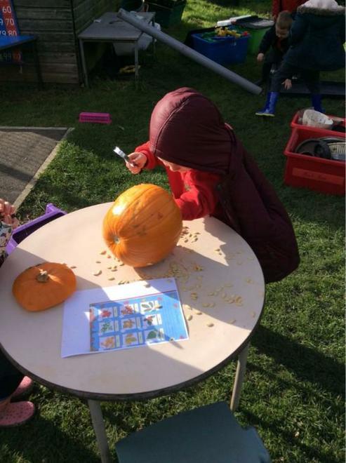 Exploring Autumnal Vegetables