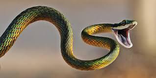 """""""A snake."""""""