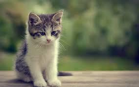"""""""A baby cat."""""""