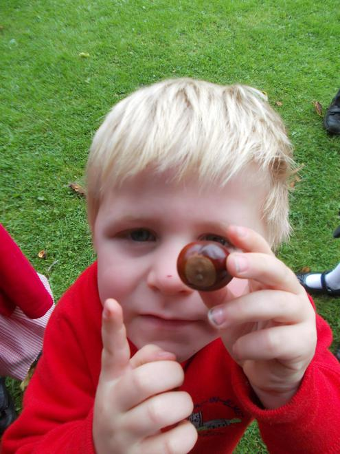 How many conkers did you find?