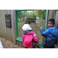 Marwell Zoo Trip - November