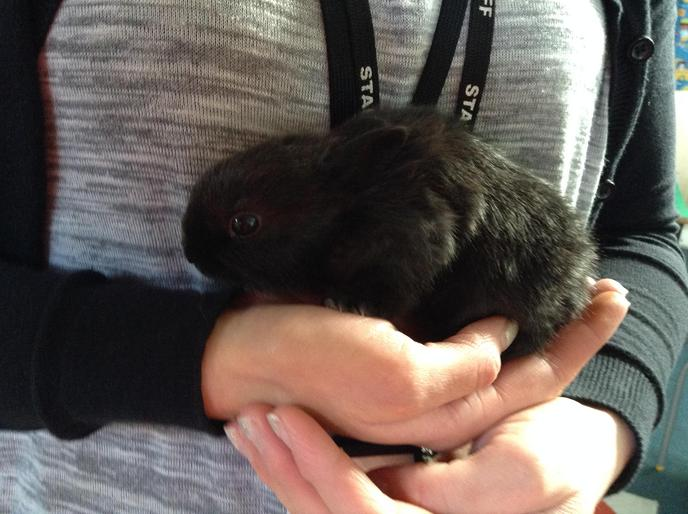 Mrs Allen holding the baby rabbit