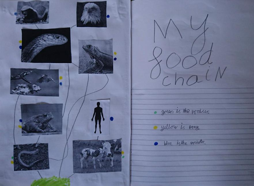 Brilliant research of Animals and Food Chains Ava!