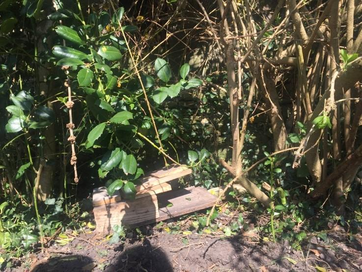 Wyn's Bug Hotel. Can you spot any bugs?