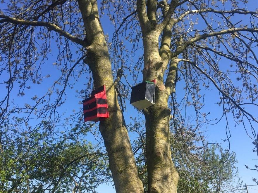 What amazing Bird Boxes! Which one did Wyn build?