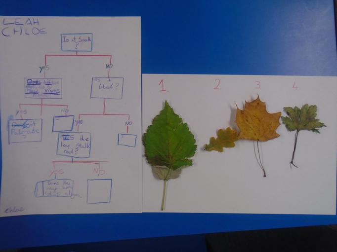 We produced scientific keys to classify leaves from the forest area.