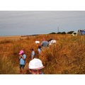 Foraging for insects in the sand dunes.