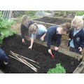 Preparing the soil for our pea plants.