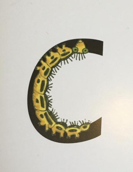 """Curl around the caterpillar."""