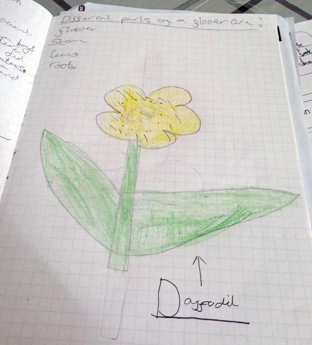 In Year 3 we are starting to learn about plants. Look at the science home learning grid on the Class 7 and 8 Pages for more plant related activities.jpg