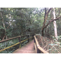 Dlinza Forest Aerial Boardwalk - 24th March 2015