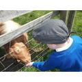 Fun at Gorse Hill City Farm
