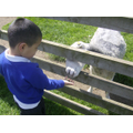 Fun at Gorse Hill City Farm
