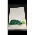 Amelia's acrostic poem about turtles