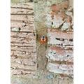 Jessica's ladybird