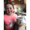 Daisy's sunflower is growing well