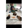 Carter's guinea pigs
