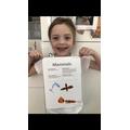Amelia's mammal writing
