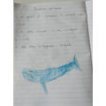 Whale writing.