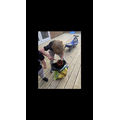 Luca planting sunflower seeds