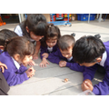 Children are introduced to R Star 2's class pets, Tom and Jerry. They excite at seeing the snails in action!