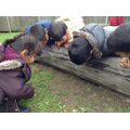 Children find a worm and observe!