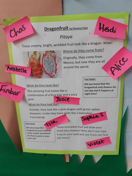 Our class report on a dragon fruit. We'll write our own independently next week!