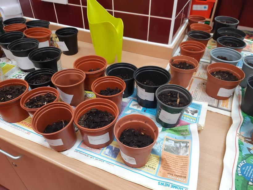 Our seeds and bulbs waiting to grow!