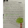 Haseeb's Rainforest Writing