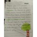 Haseeb's Rainforest Writing