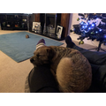 My Christmas snooze.