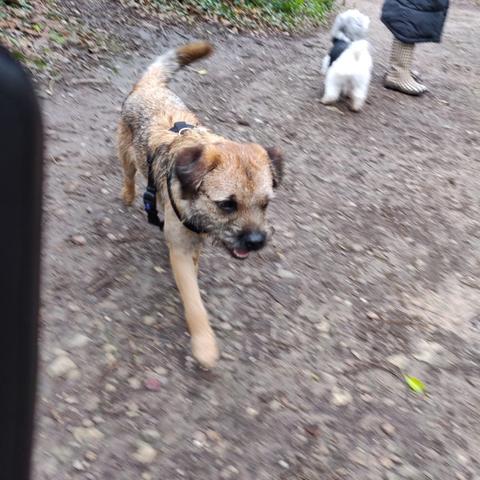 Rodney on his walk