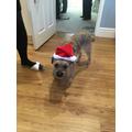 Do you like my Christmas hat?
