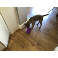 A new treat ball - how does it work?