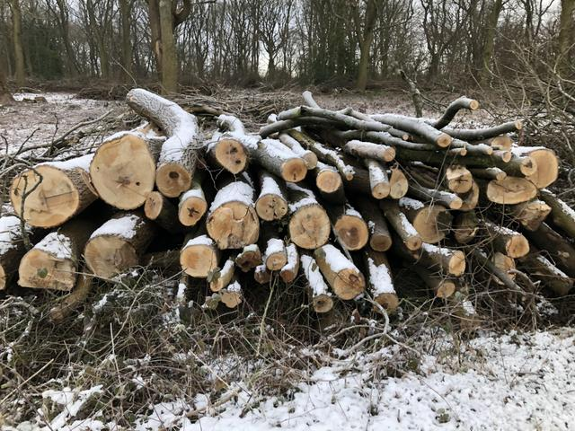 I saw a pile of logs with snow on