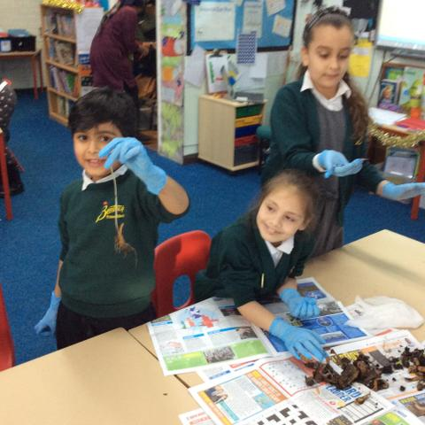 Plants are growing in our wormery!