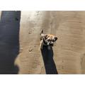 Rodney on the beach