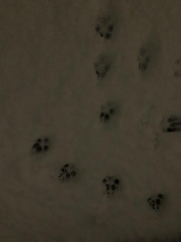 Whose foot prints are these?