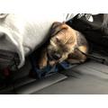 Rodney asleep in the car