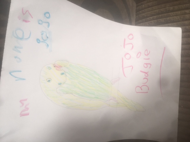 Layla's drawing of her pet budgie