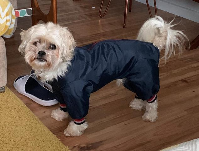 Lola looking super smart in her snow suit.